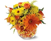 Sweet Autumn in San Clemente CA, Beach City Florist