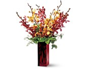 Teleflora's Orchid Splendor in Pottstown PA, Pottstown Florist