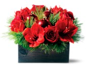 Amazing Amaryllis in Dallas TX, Petals & Stems Florist