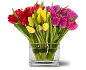 Teleflora's Tulips Together in Weymouth MA, Bra Wey Florist