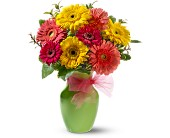 Daisy Dazzle in Bound Brook NJ, America's Florist & Gifts