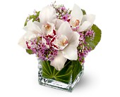 Teleflora's Lovely Orchids in Edmonton AB, Petals For Less Ltd.