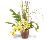 Glory of Green Orchids in Toms River NJ, John's Riverside Florist