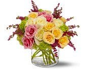 Enchanted Roses in Burlington NJ, Stein Your Florist