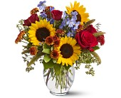 Sunny Skies in DeKalb IL, Glidden Campus Florist & Greenhouse