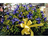 Basket of Iris in Brooklyn NY, 13th Avenue Florist