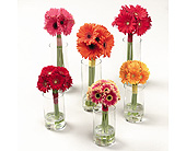 Gerbera Daisy Bouquets in Abington MA, The Hutcheon's Flower Co, Inc.