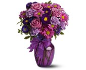 Everlasting Lavender in Waterbury CT, O'Rourke & Birch Florists