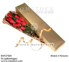 Boxed Long Stemmed Roses in Tampa FL, Moates Florist
