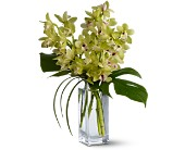 Teleflora's Orchid Elegance in Houston TX, Village Greenery & Flowers