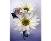 Daisy Boutonniere in Indianapolis IN, Gillespie Florists