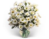 Delightful Daisies in Parry Sound ON, Obdam's Flowers