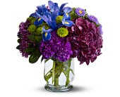 Brilliant Beauty in Dallas TX, Petals & Stems Florist