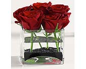 Roses in Glass Cube in Clovis CA, A Secret Garden