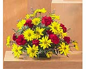Yellow Daisies and Red Carnations Arrangement in Mississauga ON, Orchid Flower Shop