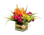 Tropical Treasure in Stuart FL, Harbour Bay Florist