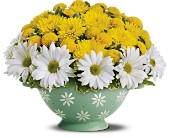 Teleflora's Daisy Colander Bouquet in Oklahoma City OK, Array of Flowers & Gifts