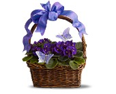 Violets and Butterflies in Hamilton ON, Joanna's Florist