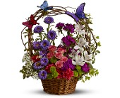 Dancing Butterflies in Waterbury CT, O'Rourke & Birch Florists