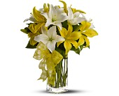 Teleflora's Pick-a-Lily in Maple ON, Jennifer's Flowers & Gifts