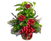 GP21 ''POTHOS IVY POLE'' in Oklahoma City OK, Array of Flowers & Gifts