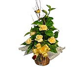 GP18 ''POTHOS IVY POLE'' in Oklahoma City OK, Array of Flowers & Gifts