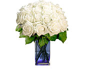 24 White Roses in Pleasanton TX, Pleasanton Floral