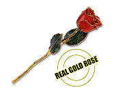 Real Gold Rose in Norwood PA, Norwood Florists