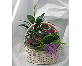 English Garden Basket in Crystal Lake, Illinois, Countryside Flower Shop