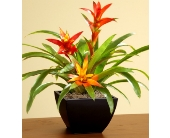 Bromelliad $39.99-$89.99 in Bradenton FL, Ms. Scarlett's Flowers & Gifts