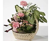 European Dish Garden Basket in Southfield MI, Thrifty Florist