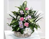 Elegant Tropical Basket Garden in Southfield MI, Thrifty Florist