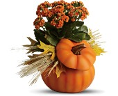 Teleflora's Harvest Pumpkin in flower shops MD, Flowers on Base