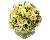 Green Goddess in Fairfield CT, Glen Terrace Flowers and Gifts