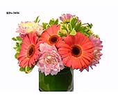 Beautiful Dreamer in Fairfield CT, Glen Terrace Flowers and Gifts