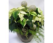 Triple White Poinsettia in Belleville ON, Live, Love and Laugh Flowers, Antiques and Gifts