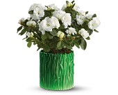 Teleflora's Grass is Greener White Azalea in Alhambra CA, Alhambra Main Florist