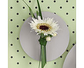 <blank> in Augusta&nbsp;GA, Ladybug's Flowers & Gifts Inc