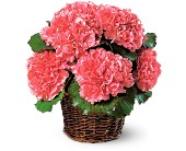 Carnation Expression in Lansdale PA, Genuardi Florist