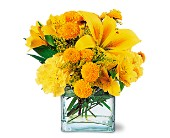 Sunshine Thoughts in Mooresville NC, All Occasions Florist & Boutique