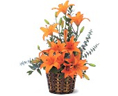 Asiatic Lilies in Hartford, Wisconsin, Design Originals Floral