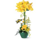 Lily Topiary in Waterbury CT, O'Rourke & Birch Florists
