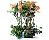 Rose Topiary in Chapel Hill NC, Floral Expressions and Gifts