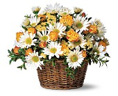 Joyful Roses and Daisies in Tampa FL, Moates Florist