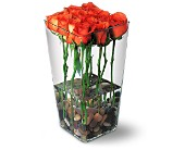 Orange Roses with River Rocks in Niagara Falls NY, Evergreen Floral