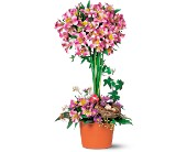 Alstroemeria Topiary in Bound Brook NJ, America's Florist & Gifts