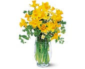 Charming Daffodils in Bound Brook NJ, America's Florist & Gifts
