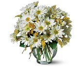 Daisy Cheer in Traverse City MI, Cherryland Floral & Gifts, Inc.