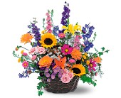 Summertime Sensation Basket in Chapel Hill NC, Floral Expressions and Gifts