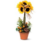 Sunflower Topiary in Edmonton AB, Petals For Less Ltd.